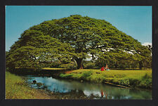 c1958 Nani Li'i Large Monkey Pod Tree hardwood for carving Hawaii postcard