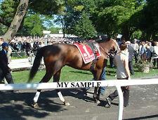 PALACE MALICE 8 by 10 PHOTO 2014 THE METROPOLITAN Horse Race BELMONT PARK #3