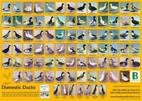 Daily Embryonic Development Of The Chick Poster 48cm x 30.5cm Brand New