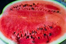Fruit Seeds Watermelon Astrakhan Very Sweet Early NON GMO GardenOriginal Package