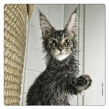 Kühlschrank - Magnet: nasse Katze - wet cat - chat