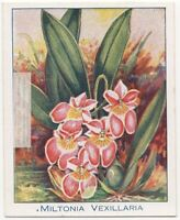 Miltonia vexillaria Orchid epiphytic orchid  90+ Y/O Trade Ad Card