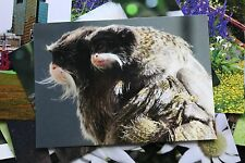 Emperor Tamarin and Baby Postcard x1