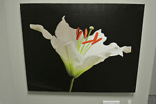 White Lily on Black Canvas Art / Printed Canvas Picture / Image / Water