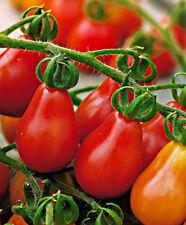 Tomato Red Pear 120 seeds – ORGANIC / NON GMO