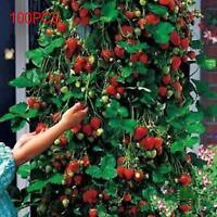 Nouveau 100pcs Fruits fraises Climbing fraise plante rouge Graines de jardin *!