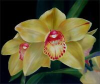 Yellow/Red Orchids, Quality Hand Painted Oil Painting 20x24in