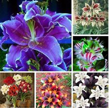 100 Pcs/lot Amaryllis Seeds, Cheap Chinese Flower Seeds, Barbados Lily Potted