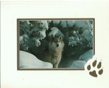 Wolf in Snow Art Print with Paw Print Matted 8x10 Nos Photo