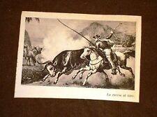 Gaucio caccia un toro Brasile