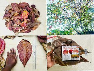 Indian Almond Leaves,A+ Catappa Ketapang for Fish,Shrimp,Aquarium Free Shipping