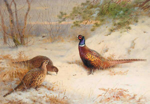 Dream-art hand paint Oil painting beautiful bird in landcape free postage canvas