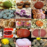 100 Rare Mix Lithops Seeds Living Stones Succulent Cactus Organic Bulk Seed Hot