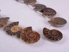 0089 27-30mm Ammonite fossil graduated loose beads 10pcs