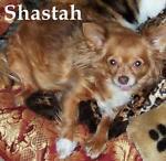 shastahs-place