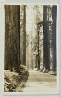 California In The Redwoods RPPC c1939 Cleveland Heights Postcard N20