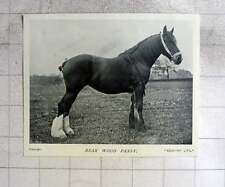 1905 Lovely Horse, Bear Wood Pansy