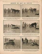 Soldats Chevaux Cheval Horses Vétérinaire Bataille de la Somme Poilus 1916 WWI