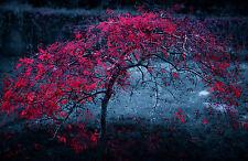 Enmarcado impresión rosa hojas de árbol sobre un fondo azul-gris (imagen arte escénico)