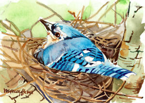 ACEO Limited Edition- Blue jay nest, Bird Art print, Gift for her
