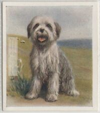 Old English Sheepdog Puppy Dog Pet Animal Canine 80+ Y/O Trade Ad Card