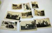 Lot of 9 Antique Real Animal Photographs