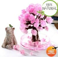Japanese Sakura Oriental Seeds Plants Cherry Blossom Bonsai For & Home 10pcs