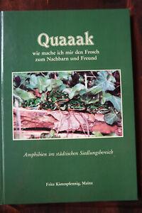 Quaaak, Frosch Amphibien im städtischen Siedlungsbereich Küstenpfennig Geb. xx