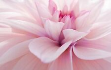 SUPERB ABSTRACT PINK FLOWER CANVAS #280 QUALITY FLORAL CANVAS PICTURE WALL ART