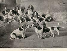 BASSET HOUND ANTIQUE Dog Art Engraving Print 1895 - Mr J Moss's Pack Winchester