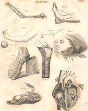 BIOLOGY. Anatomy. Feet hert arms levers. (Oxford Encyclopaedia) 1830 old print