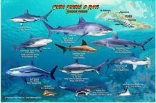 Cuba Sharks & Rays Franko Maps Laminated Fish Card