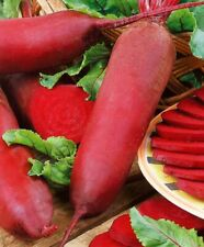 Seeds Beet Cylinder Beetroot Red Vegetable Organic Heirloom Russian Ukraine