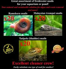 60+Live Cleaner/Feeder Snails 3 types Ramshorn, Malaysian, Pond (Fern Moss ADA)