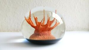 Caithness Paperweight - CORAL (ORANGE) CT-8 - CT/PH 1972 Colin Terris - Ltd Ed