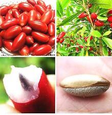 8pcs Rare Miracle Fruit Synsepalum Dulcificum Seeds Tropical Organic