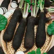 Kings Seeds - Radish Black Spanish Long (Moolli Type) - 750 Seeds