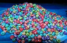 1/2 POUND OF DYED VENETIAN SNAIL SHELLS BEACH DECOR NAUTICAL CRAFT TROPICAL