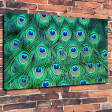 """Green Peacock Feathers Printed Box Canvas Picture A1.30""""x20""""30mm Deep Wall Art"""