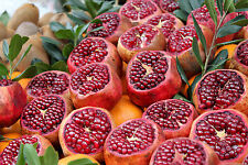 Pomegranate - PUNICA GRANATUM - 10 Seeds - Vegetables/ Fruits