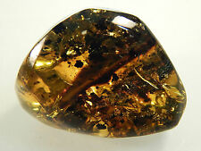"Tree Amber Fossilized Resin Gemstone Hand Polished Stone Mexico 1.25"" 8g (AMB2)"