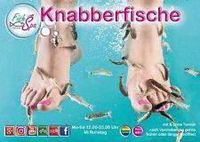 Knabberfisch Pediküre (garra rufa) im Marina Fish Spa Köln - Fußpflege