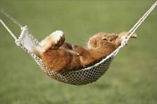 "653712 12""x8"" (30x20cm) Print of Rabbit lying down in a hammock"
