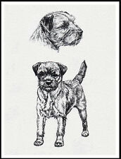 BORDER TERRIER DOG STUDY SKETCH PRINT CHARMING DOG PRINT POSTER