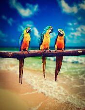 METAL REFRIGERATOR MAGNET Macaws Parrots Birds Beach Macaw Parrot Bird