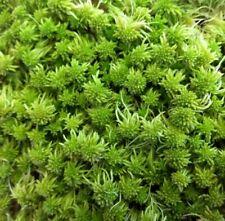 Sphagnum Moss! Fresh Live Lush Green for Terrariums Vivariums Carnivorous Plants