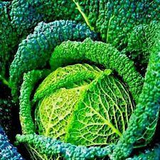 Légumes Savoie Choux Vertus Environ 125 Graines
