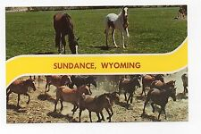 Chrome Postcard,Sundance,Wyoming,Horses,Dexter Press