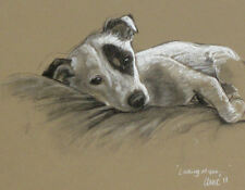 Jack Russell Terrier dog Limited Edition print 'Looking at you' by H Irvine