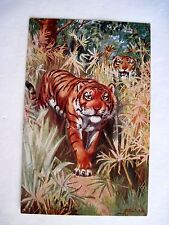 """Go Wild With Set Of Six """"Tuck"""" Postcards w/ Tigers, Bears, Giraffes & Camels *"""